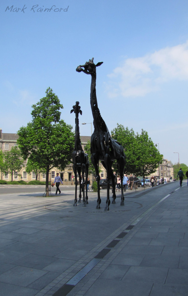 Omni Giraffes