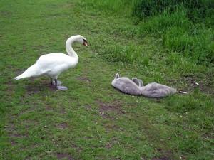 Figgate Park - Wildlife